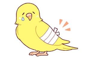 ケガで泣いている黄色い鳥のイラスト